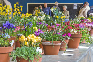 Alpine Society - Early Spring Show