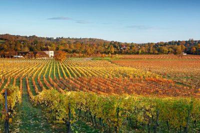 Autumn Trip to Denbies Wine Estate @ Depart from Bakers Lane